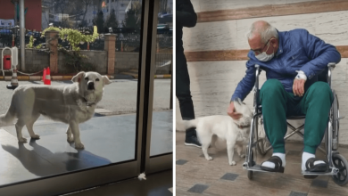 Photo of Faithful Dog Waits Outside Her Human's Hospital For 6 Days