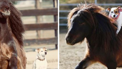 Photo of Rescue Dog Is Obsessed With Riding On Horse Friend's Back