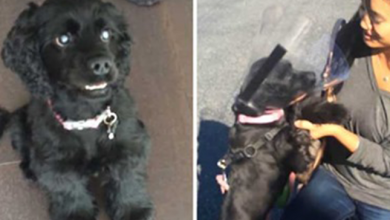 Photo of Blind Rescue Dog Sees Her Family For The First Time After Getting Eye Surgery