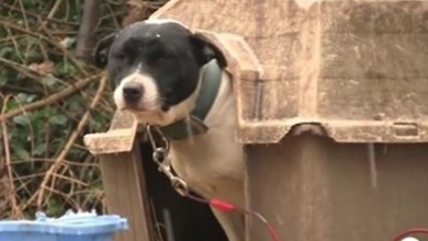 Photo of Two Dogs Freed From Their Chains Make A Lasting Impact On Their Neighborhood